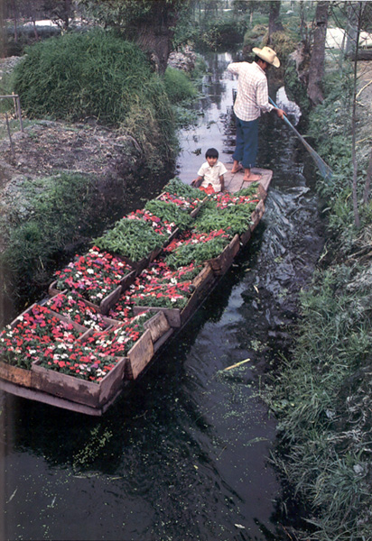 chinampas xochimilco - photo #28