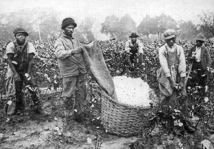 http://www.latinamericanstudies.org/slavery/cotton-pickers-1.jpg